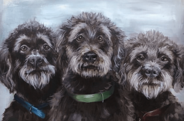Osso, Boyce and Nellie the Labradoodles